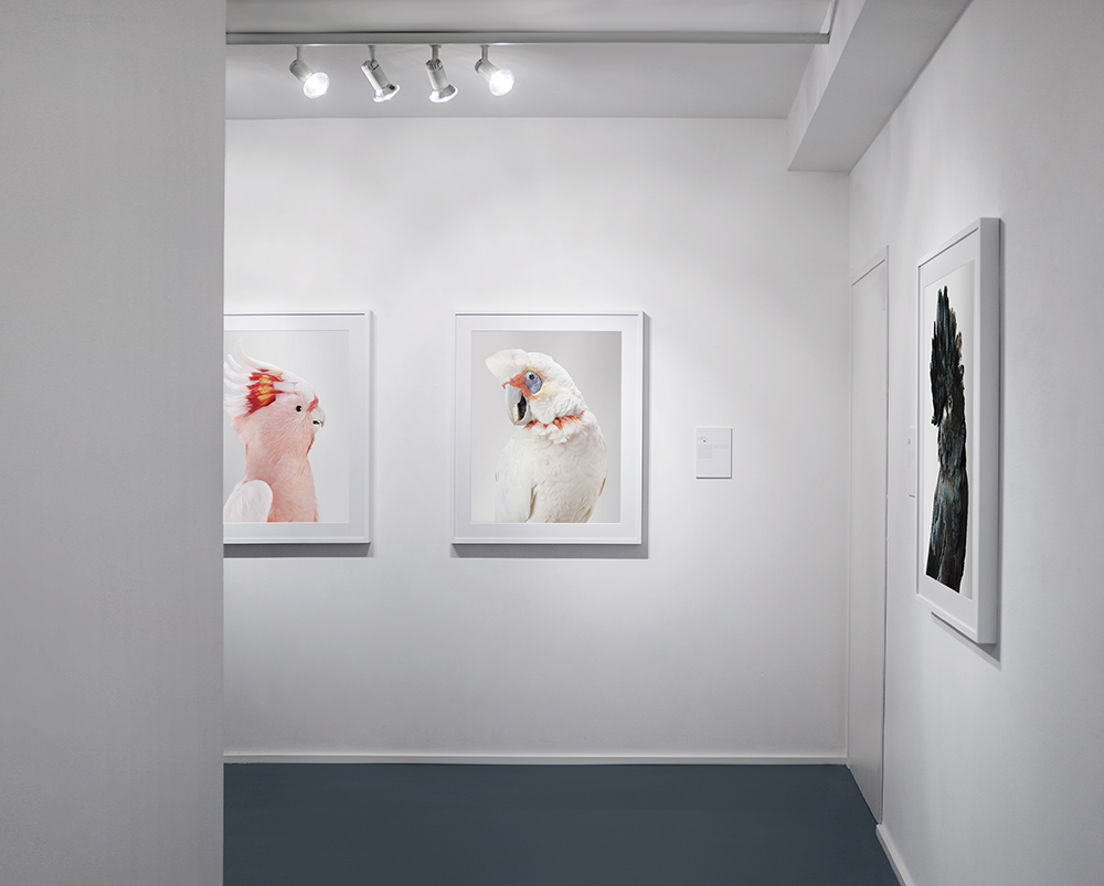 Bird+Love,+2016,+Purdy+Hicks+Gallery,+London+3